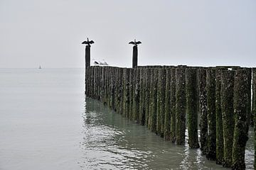 Cormorans sur la plage de la mer du Nord sur 7Horses Photography