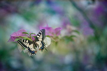 Vlinder van Alida Jorissen