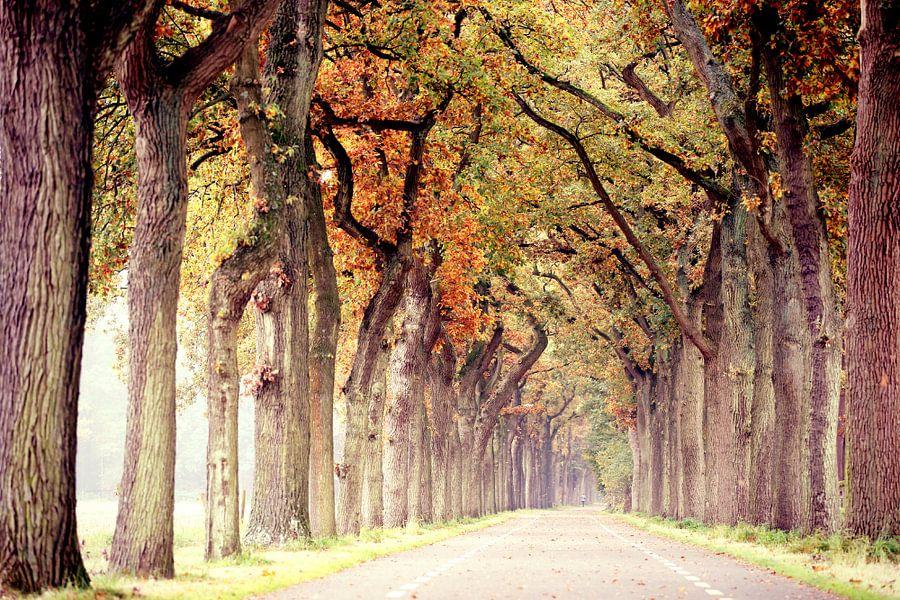 endless road in autumn..  van Els Fonteine