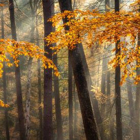 Herfst op de Veluwezoom van Sander Grefte