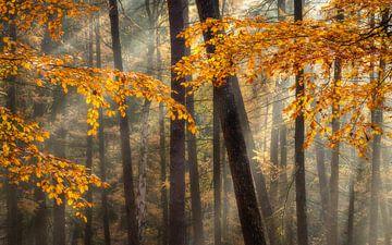 Herbst im Veluwezoom von Sander Grefte