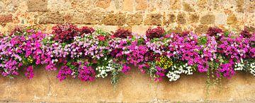 Flower wall sur Corinne Welp