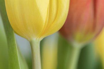 Tulpen in gelb und rot von Marianne Twijnstra-Gerrits
