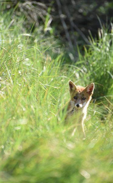 Jonge vos van Kirsten Geerts