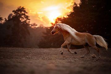 Galoppierendes Pferd in den Dünen von Soester / Niederlande / Tierfotografie / Golden Hour von Jikke Patist