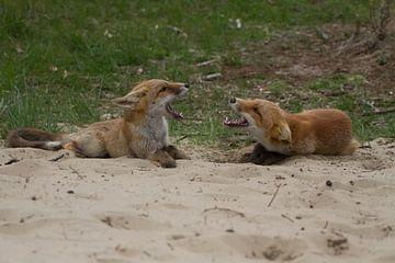 Jonge vossen 2 van Wesley Klijnstra