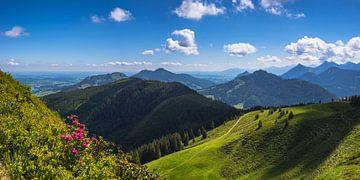 Alpenrozen op de Wertacher Hörnle van Walter G. Allgöwer