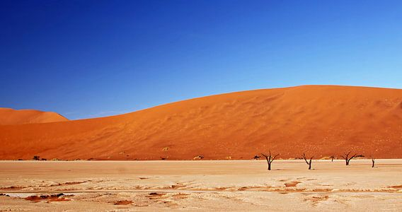 At the Dead Vlei Namibia van W. Woyke