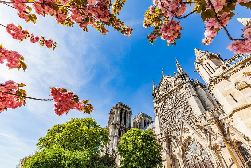 Cherry blossom at Notre-Dame de Paris Cathedral in Paris van Werner Dieterich