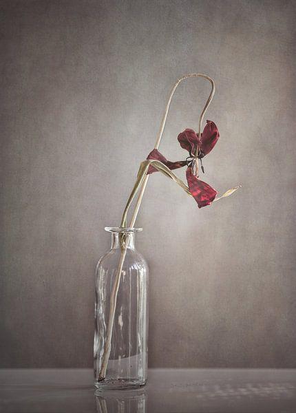 Tulp van Götwin van Bergen