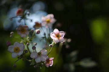 Blumen im Durchlicht von Steffi Hommel