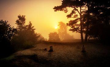 Soesterduinen in de mist van Rop Oudkerk