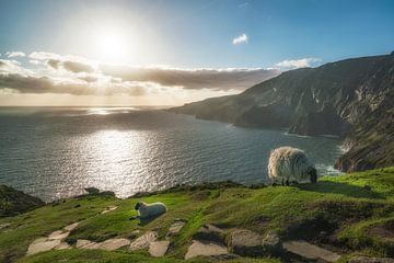 Slieve League uitzicht met schapen van Roelof Nijholt