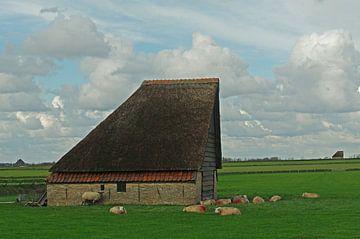 Les moutons de Texel vont bien avec les moutons sur Wim van der Geest