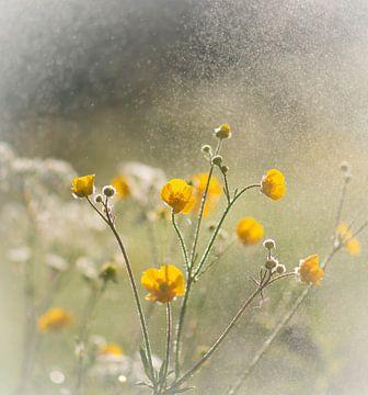 nebulöse Butterblumen von Tania Perneel