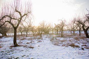 Boomgaard in de winter van Tess Smethurst-Oostvogel