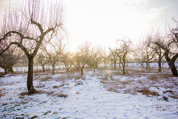 Boomgaard in de winter von Tess Smethurst-Oostvogel