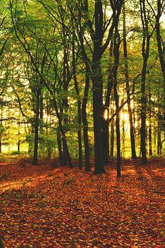 Autumn colors sur Lizet Wesselman