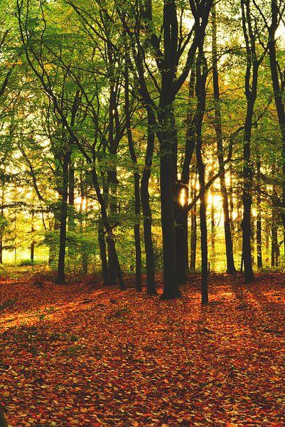 Herfst kleuren van Lizet Wesselman