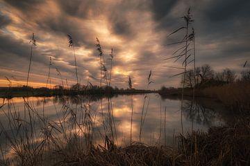Meertje met mooie zonsopkomst van Moetwil en van Dijk - Fotografie