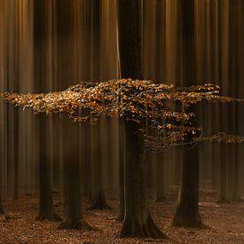 Lights of fall van Roelie Steinmann