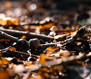 Einsamer Pilz von Marjon Boerman