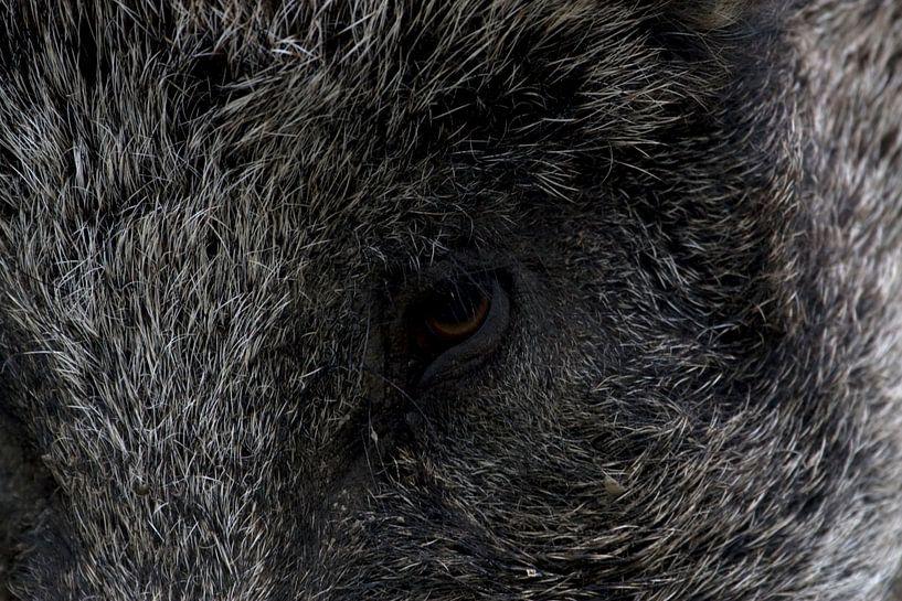 Wild Zwijn van Ronald Jansen