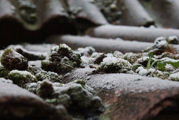 Rijp op het dak met vetplantjes van Arjen Monden