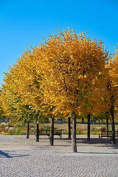 Lindenbäume mit goldener Herbstfärbung in einem Park in Magdeburg von Heiko Kueverling