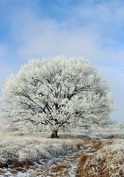 Winters landschap  van Marcia Bergsma