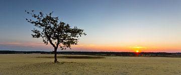 Sunset @ te Dunes II van