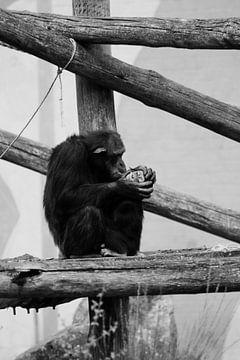 Affenmutter mit Kleiner von Emma Wilms