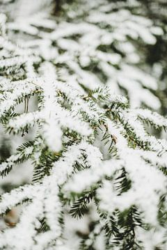 Nature morte des branches de pin enneigées sur Holly Klein Oonk