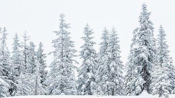 """Waldlandschaft """"Weiße Wächter im Schnee"""" von Coen Weesjes"""
