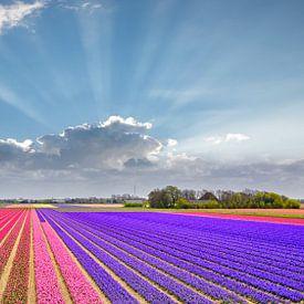 bunte Frühlingslandschaft von eric van der eijk