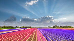 kleurrijk lente landschap van