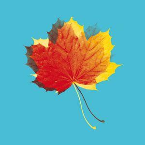 Herbstblätter in Rot und Gelb auf Blau
