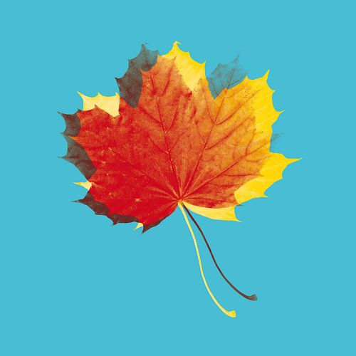 Herfstbladeren in rood en geel op blauw