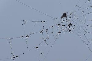 Druppels in spinnenweb blauwe achtergrond