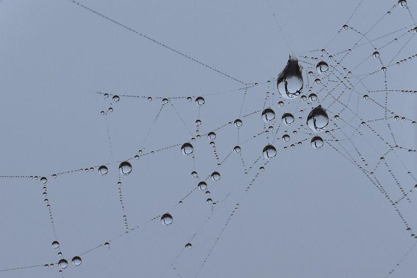 Druppels in spinnenweb blauwe achtergrond van Sascha van Dam