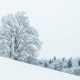 Besneeuwde boom op een helling van Frank Herrmann