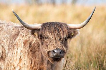 Portrait d'un Highlander écossais sur Gert Hilbink