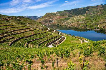 Douro-Tal von Antwan Janssen