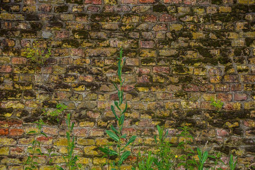 The Wall von Brian Morgan