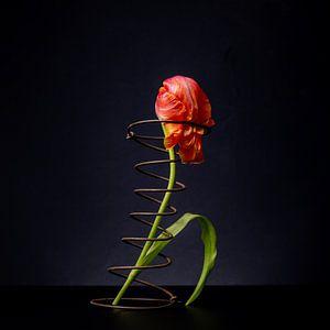 Tulp in spiraal, gevoelsmoment van Matty Maas