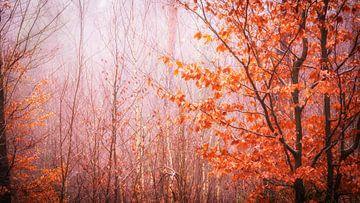 Herbstliche Waldstimmung von Tobias Luxberg