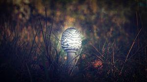 Autumn 2018 Magical Mushrooms van