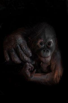 Als optimistisches und neugieriges Orang-Utan-Jungtier steht die Hand seiner Mutter für Fürsorge und von Michael Semenov