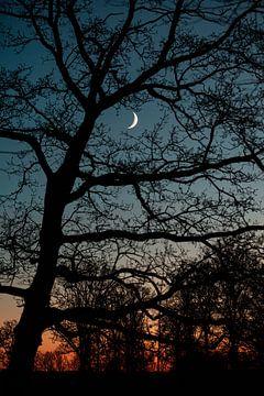 Maan schijnt door de bomen van Marco Scheurink
