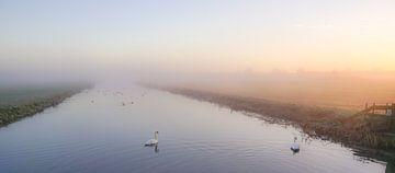 Zwanen in de mist von Dirk van Egmond